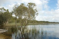 Brown Lake, Stradbroke Island. Brown Lake, North Stradbroke Island, Queensland, Australia, is a perched lake; its tea color comes from the tannin of the royalty free stock image