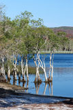 Brown Lake, Stradbroke Island. Brown Lake, North Stradbroke Island, Queensland, Australia, is a perched lake; its tea color comes from the tannin of the stock photography