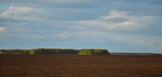 Brown-Landwirtschaftsfeld und blauer Himmel Stockbilder