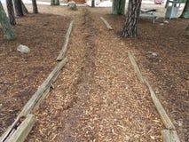 Brown-Laubdecke oder Holzspanweg mit Abnutzung lizenzfreies stockbild