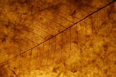 Brown Leaf. A brown leaf under dim light Royalty Free Stock Image