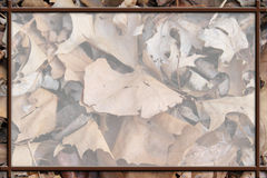 Brown Leaf Background Royalty Free Stock Images