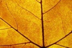 Brown leaf closeup detail Stock Images