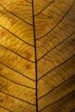 Brown leaf closeup Royalty Free Stock Image