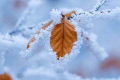 Brown leaf covered with frost Stock Photo