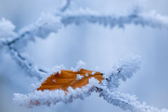 Brown leaf covered with frost Stock Images