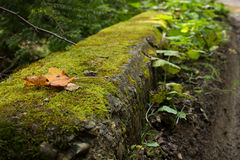 Brown leaf fallen on green moss. Brown leaf fallen on moss with tree branches in the background royalty free stock photography