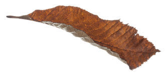 Brown Leaf Falling Stock Photo
