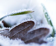 Brown leaf and green grass with ice Royalty Free Stock Photo