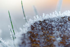 Brown leaf with ice crystals Stock Images