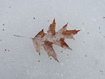 Brown leaf in ice Royalty Free Stock Photo