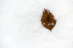 Brown leaf laying in the snow Stock Photo