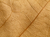 Brown leaf macro Stock Photo