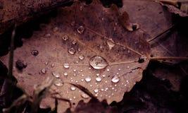 Brown leaf macro Stock Photos