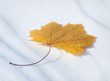 Brown leaf in November fell Royalty Free Stock Images
