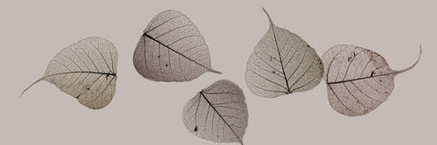 Brown leaf silhouettes Royalty Free Stock Images