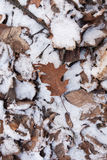 Brown leaf on snow Royalty Free Stock Photo