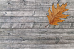 Brown leaf standing on gray wooden board Stock Image