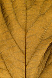 Brown leaf texture Stock Photos