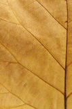 Brown leaf Royalty Free Stock Photos