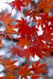 Brown Leaf in Tilt Shift Photograph Stock Image