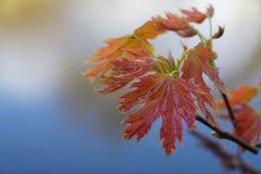 Brown leaf Stock Image