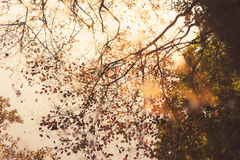 Brown Leaf Tree Under White Clouds at Daytime Stock Image