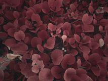 Brown Leafed Plants Royalty Free Stock Images
