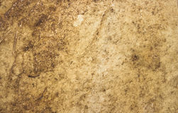 Brown leather background. Royalty Free Stock Images