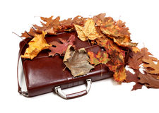 Brown leather briefcase and autumn multicolor dry leaves Royalty Free Stock Photography