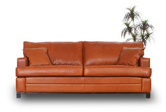 Brown leather sofa with small palm tree stock photo