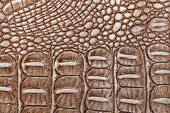 Brown leather texture background. Closeup photo. Reptile skin. Royalty Free Stock Image