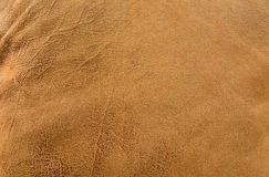 Brown leather texture background. Stock Image
