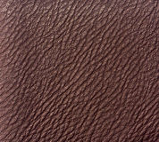 Brown leather Stock Image