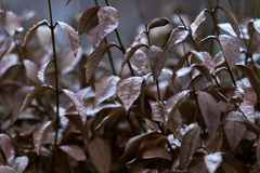 Brown leaves Royalty Free Stock Images