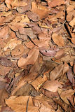 Brown Leaves Background. Dried brown leaves texture background royalty free stock photography