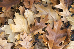 Brown leaves background Stock Photos