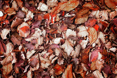 Brown leaves background Stock Photo