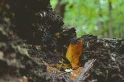 Brown Leaves on the Black Textile during Daytime Royalty Free Stock Images