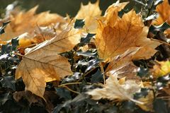 Brown leaves. In the forest royalty free stock images