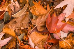 Brown Leaves Closeup On Ground. Royalty Free Stock Photos