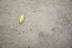 Brown leaves on concrete floor/ground on top view Royalty Free Stock Photography