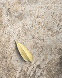 Brown leaves on concrete floor/ground. Royalty Free Stock Image