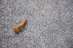 Brown leaves on concrete floor/ground. Royalty Free Stock Photo