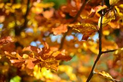 Brown Leaves during Daytime Royalty Free Stock Image