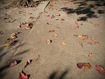 Brown leaves fall on the ground Stock Image