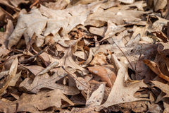Brown Leaves Royalty Free Stock Photos