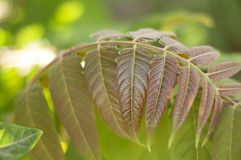 Brown leaves on green background. Branch with leaves on green background Stock Photography
