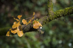Brown leaves on a green branch tree Stock Photos