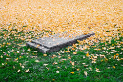 Brown Leaves on Green Grass and Tomb during Daytime Stock Image